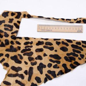 Пони, леопард-poni1-9