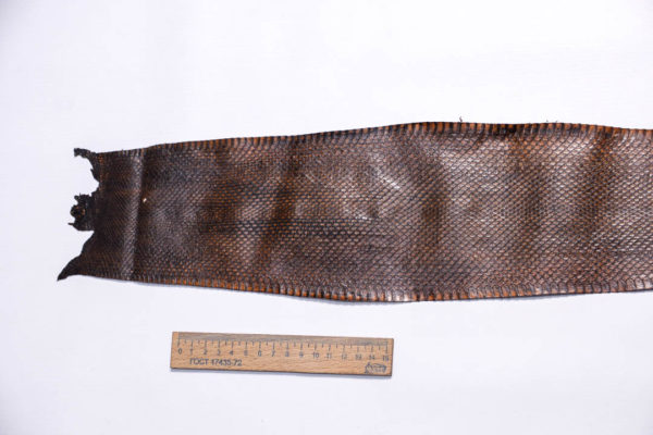 Кожа змеи, коричневая, 89х12,5 см.-zm4-132