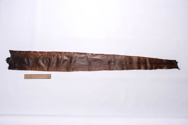 Кожа змеи, коричневая, 100х12 см.-zm4-142