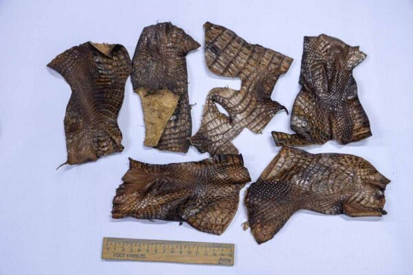 Кожа крокодила, коричнево-оливковая- kr-220