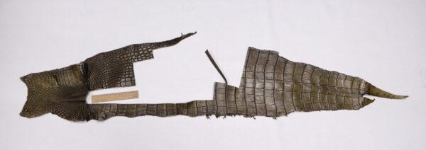 Кожа крокодила, хаки, 43х24 см.- kr-306