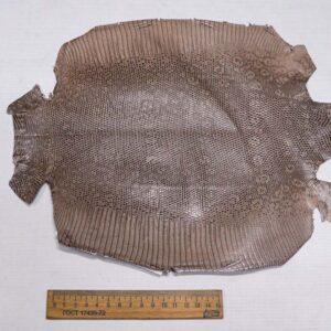Кожа игуаны, капучино, 33х28 см.- ign-015