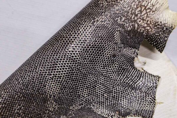 Кожа игуаны, молочно-серая, 36х30 см.- ign-019