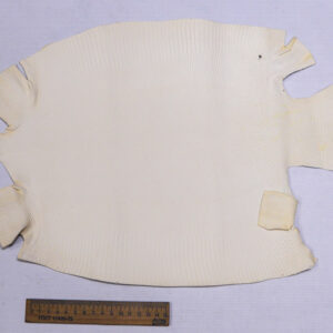 Кожа игуаны, молочная, 42х31 см.- ign-031