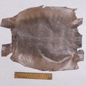 Кожа игуаны, капучино, 30х28 см.- ign-008
