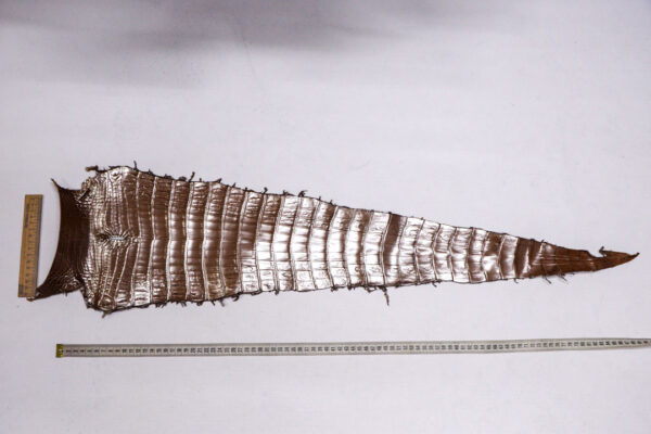 Кожа крокодила, светло-коричневая с перламутром, 75х22 см.- kr-382