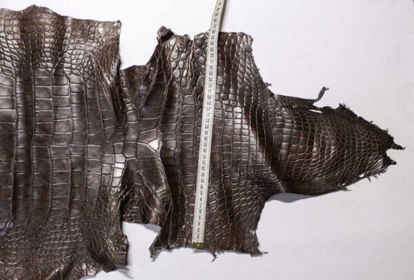 Кожа крокодила, серо-коричневая, 197х46 см.- kr-384