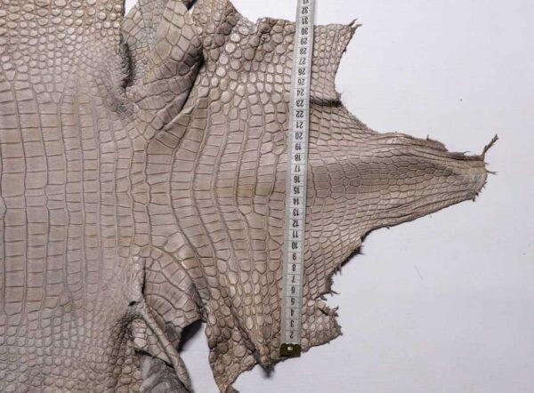 Кожа крокодила, светло-серая, 151х42 см.- kr-386