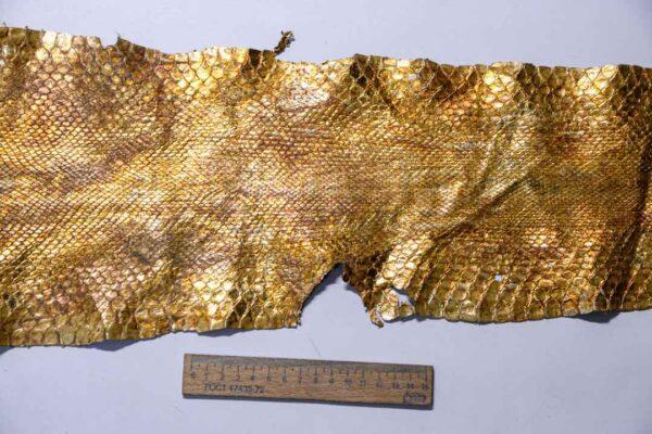 Кожа питона, золотая, 267х27 см.-zm1-90
